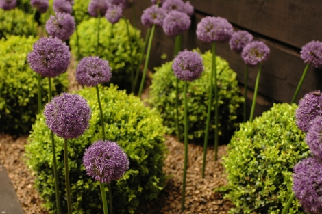 Garden Landscape Directory Hints Tips How To