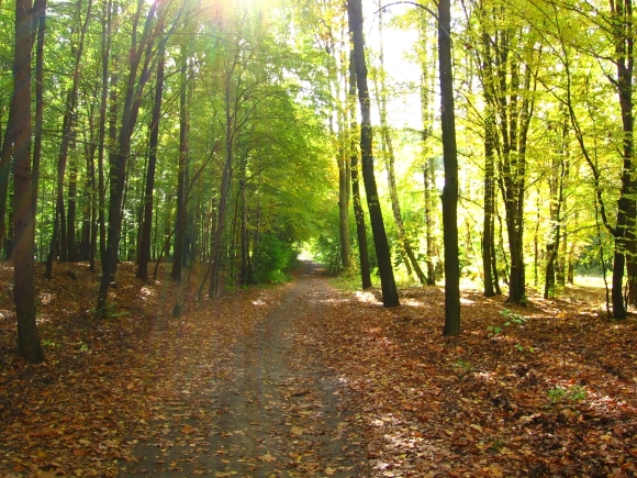 Łagiewniki Forest in autumn. Photograph by Zorro2212