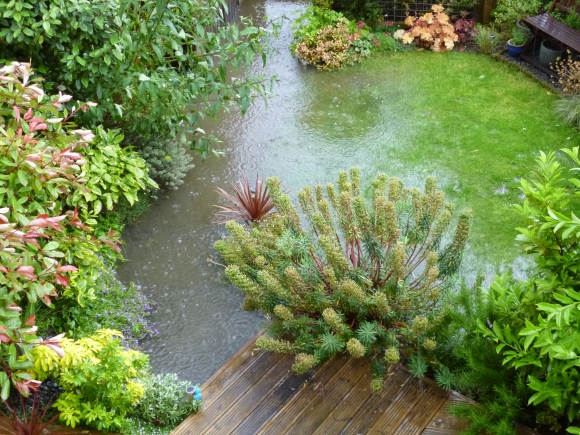Flooded garden. Photograph by Graham Soult