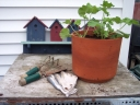 Potted geranium with gardening tools. Photograph by Fran Linden