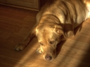Sleeping dog on laminate floor. Photograph by Jonathon Monk