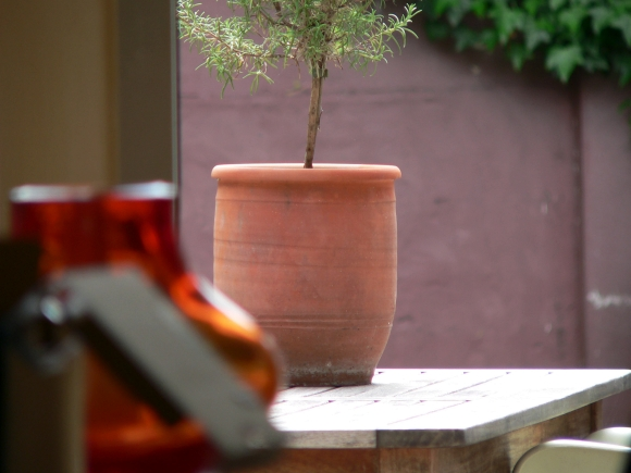 Backyard with plant in pot. Photograph by Brian van den Heuvel